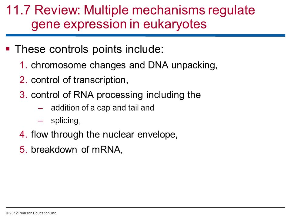 11.7 Review: Multiple mechanisms regulate gene expression in eukaryotes