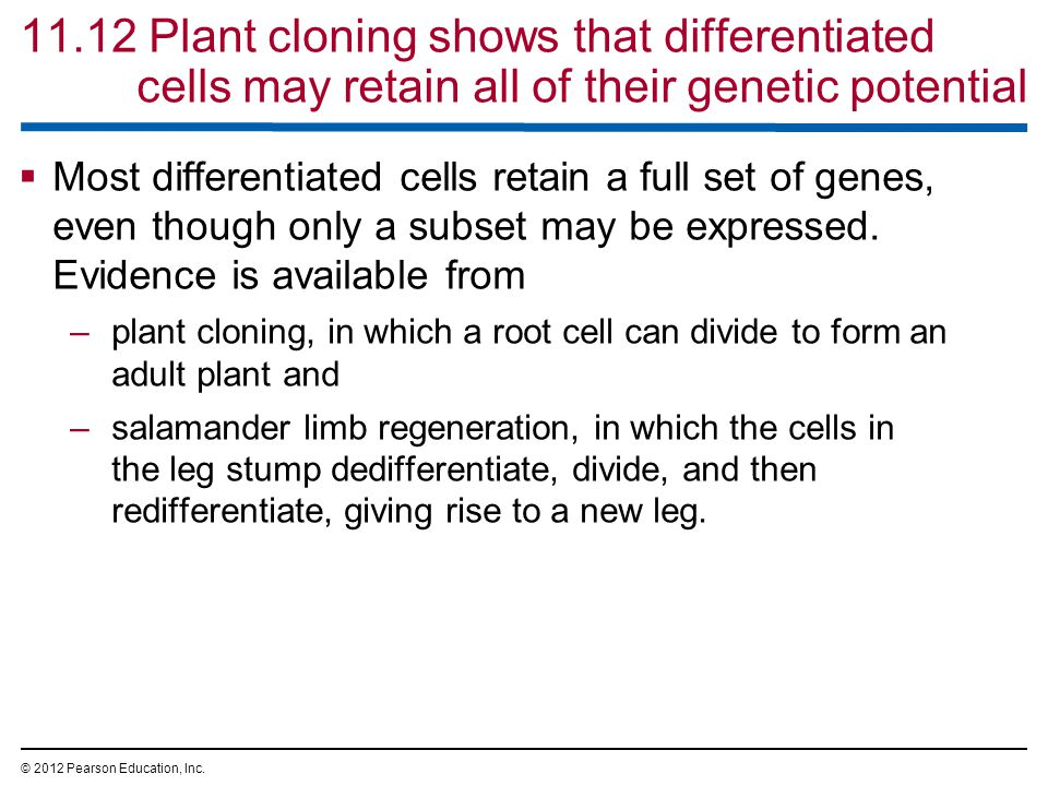 11.12 Plant cloning shows that differentiated cells may retain all of their genetic potential