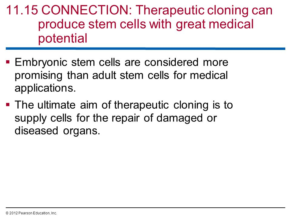 11.15 CONNECTION: Therapeutic cloning can produce stem cells with great medical potential