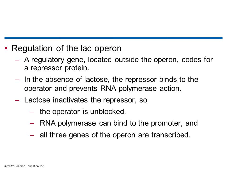 Regulation of the lac operon
