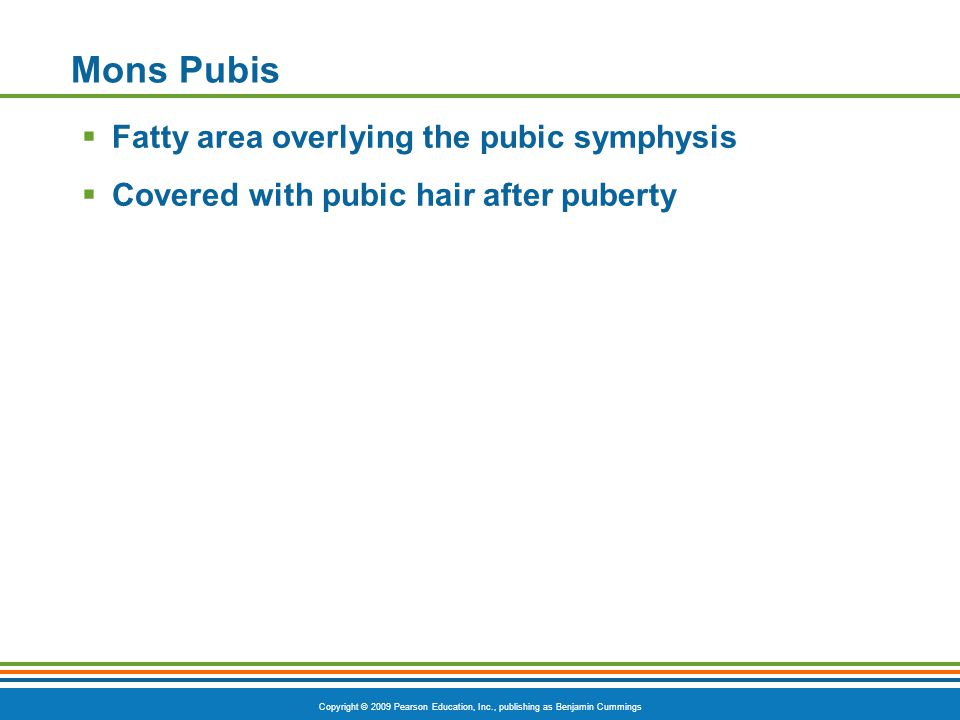 Mons Pubis Fatty area overlying the pubic symphysis