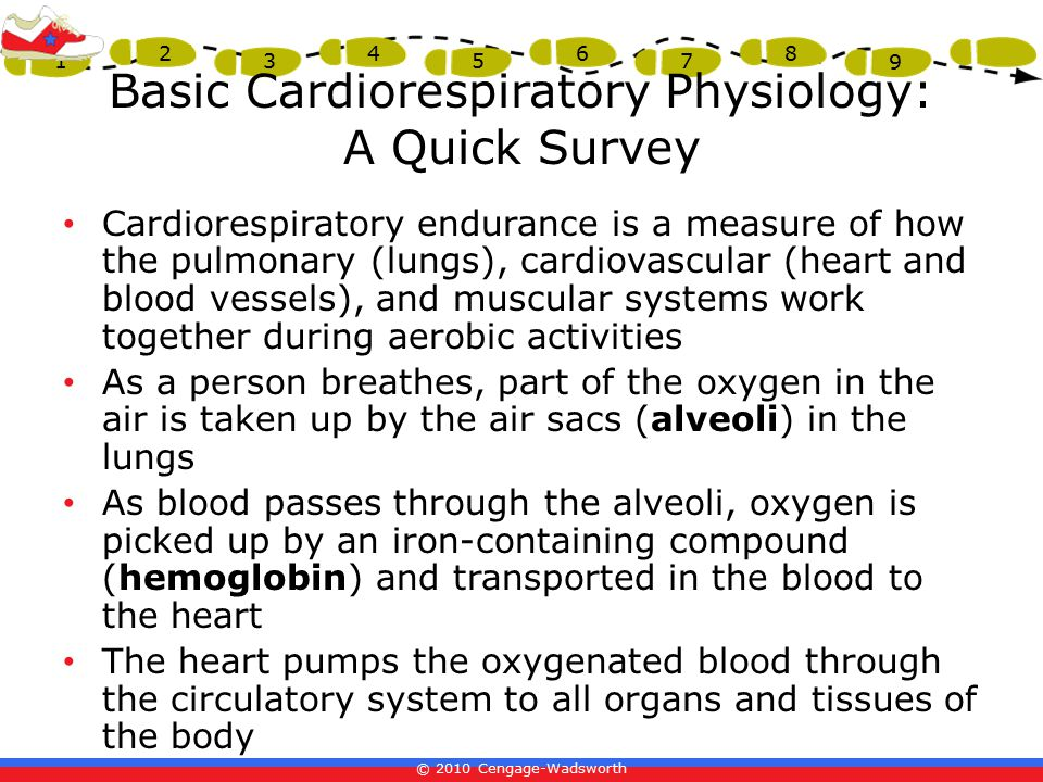 Basic Cardiorespiratory Physiology: A Quick Survey
