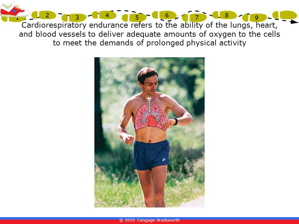 Cardiorespiratory endurance refers to the ability of the lungs, heart, and blood vessels to deliver adequate amounts of oxygen to the cells to meet the demands of prolonged physical activity