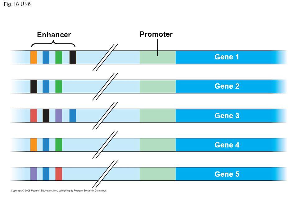 Enhancer Promoter Gene 1 Gene 2 Gene 3 Gene 4 Gene 5