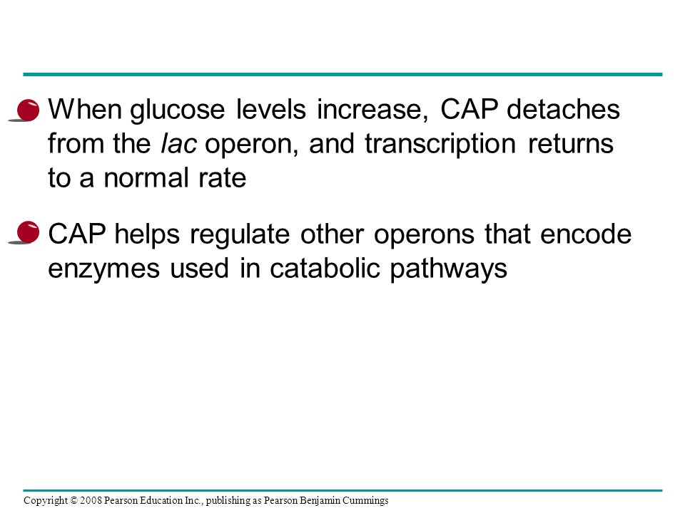 When glucose levels increase, CAP detaches from the lac operon, and transcription returns to a normal rate