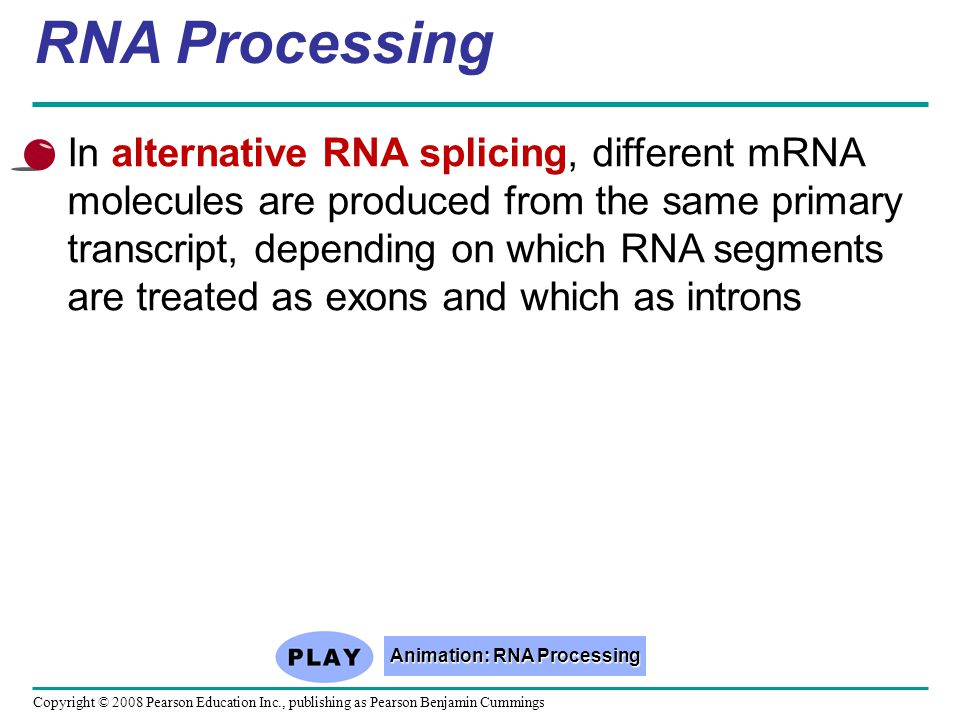 Animation: RNA Processing