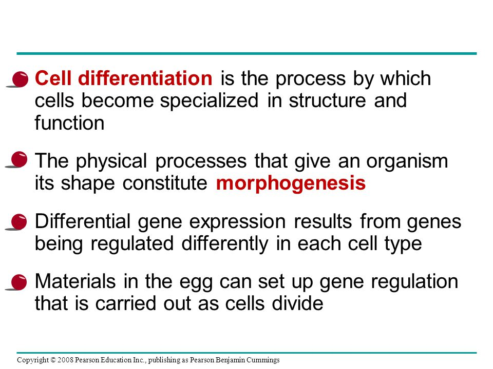 Cell differentiation is the process by which cells become specialized in structure and function