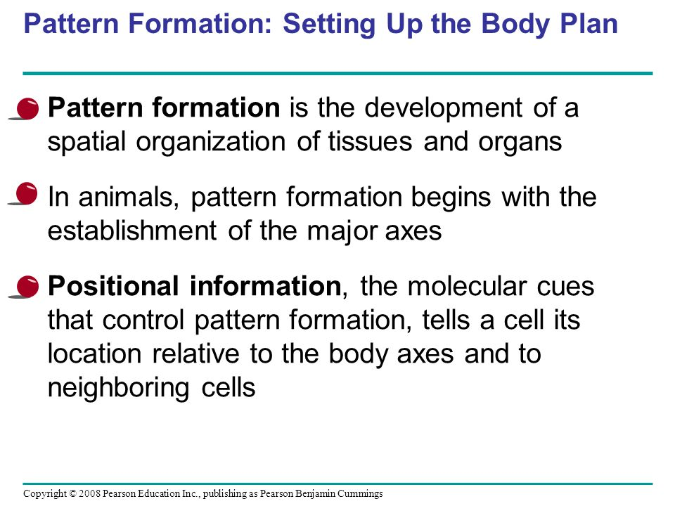 Pattern Formation: Setting Up the Body Plan