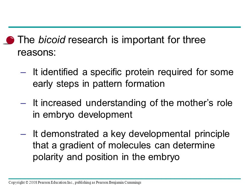 The bicoid research is important for three reasons:
