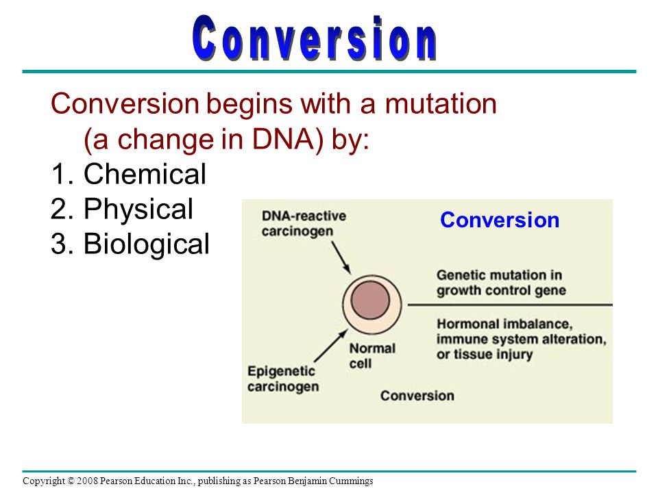 Conversion Conversion begins with a mutation (a change in DNA) by: