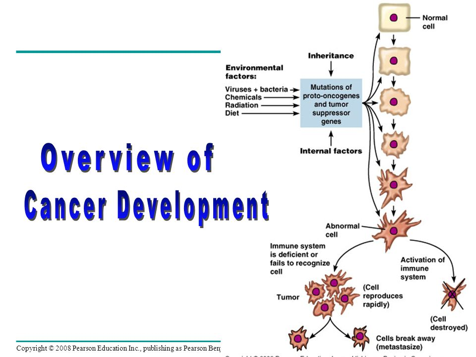 Overview of Cancer Development