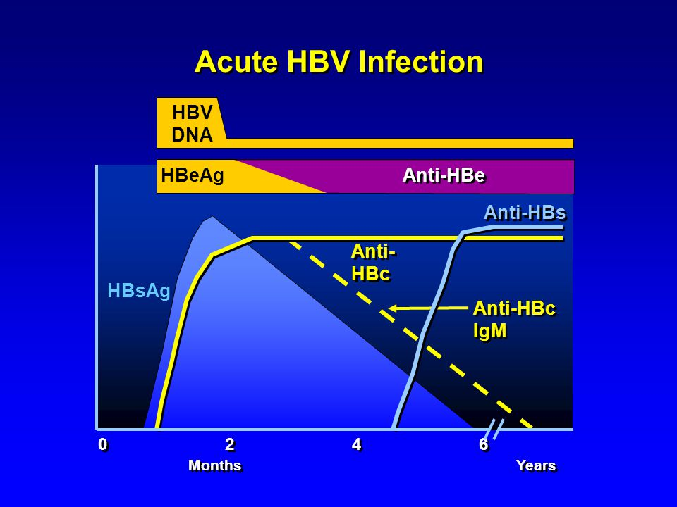 Acute HBV Infection HBV DNA HBeAg Anti-HBe Anti-HBs Anti-HBc HBsAg