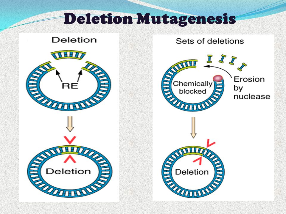 Deletion Mutagenesis