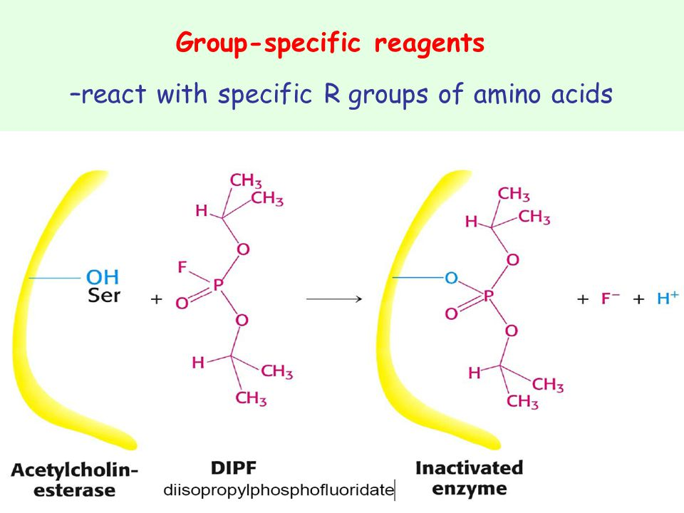 Group-specific reagents