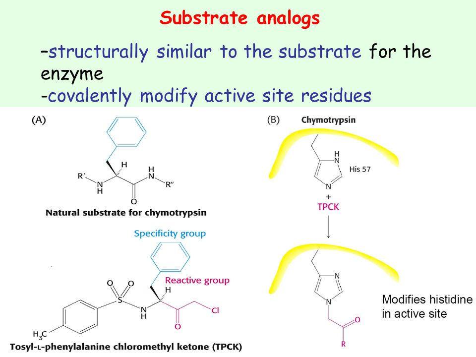 Substrate analogs –structurally similar to the substrate for the enzyme.