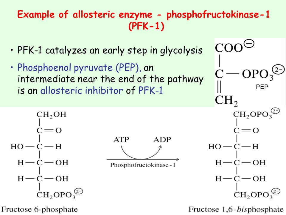 Example of allosteric enzyme - phosphofructokinase-1