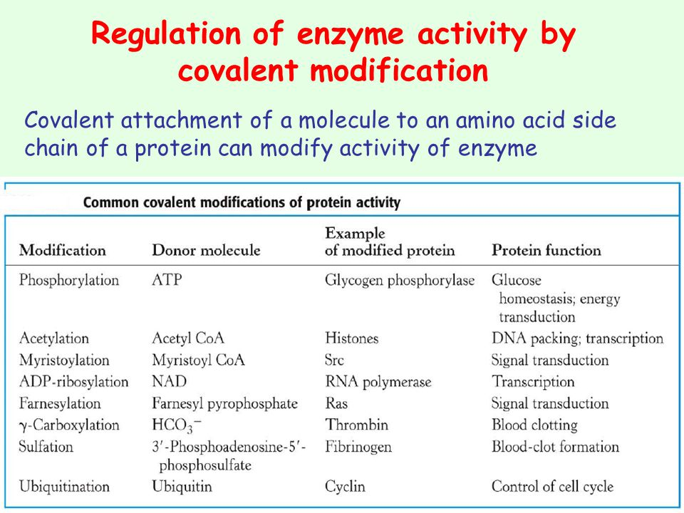 Regulation of enzyme activity by covalent modification