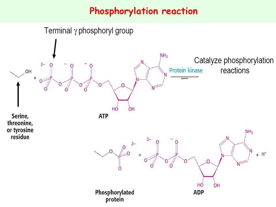 Phosphorylation reaction