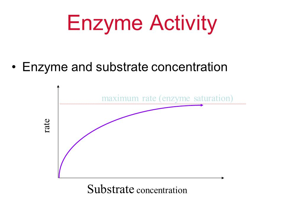 Enzyme Activity Enzyme and substrate concentration