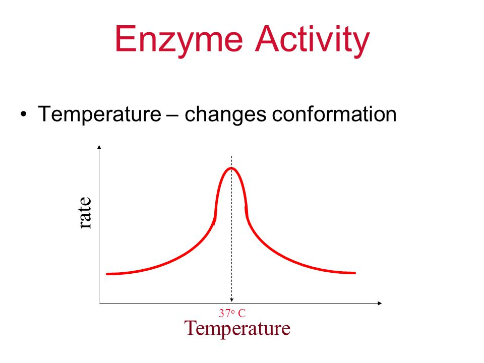 Enzyme Activity Temperature – changes conformation rate Temperature