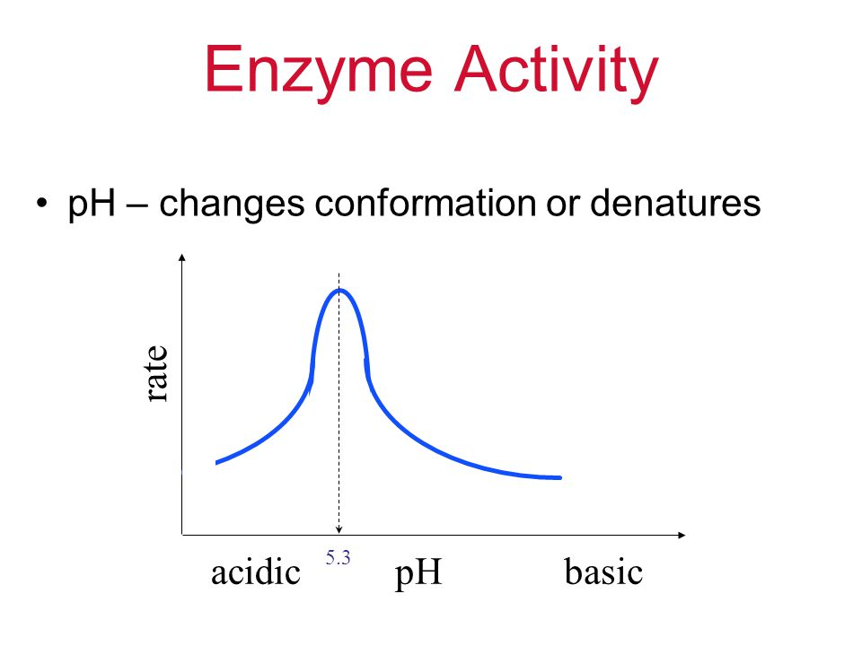 Enzyme Activity pH – changes conformation or denatures rate acidic pH