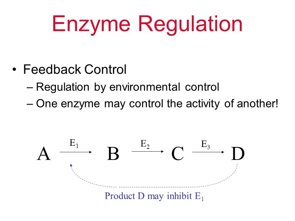 Enzyme Regulation A B C D Feedback Control