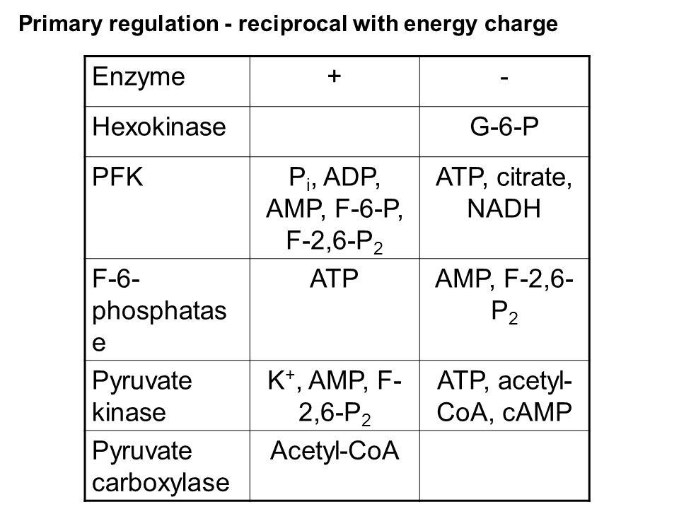 Enzyme + - Hexokinase G-6-P PFK Pi, ADP, AMP, F-6-P, F-2,6-P2