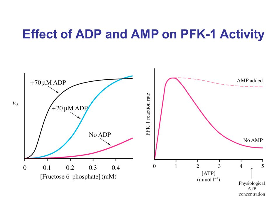 Effect of ADP and AMP on PFK-1 Activity