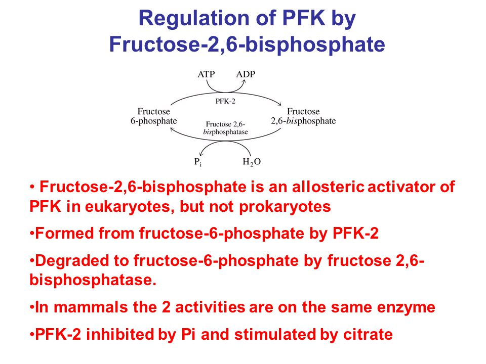 Regulation of PFK by Fructose-2,6-bisphosphate