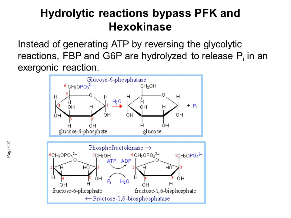 Hydrolytic reactions bypass PFK and Hexokinase