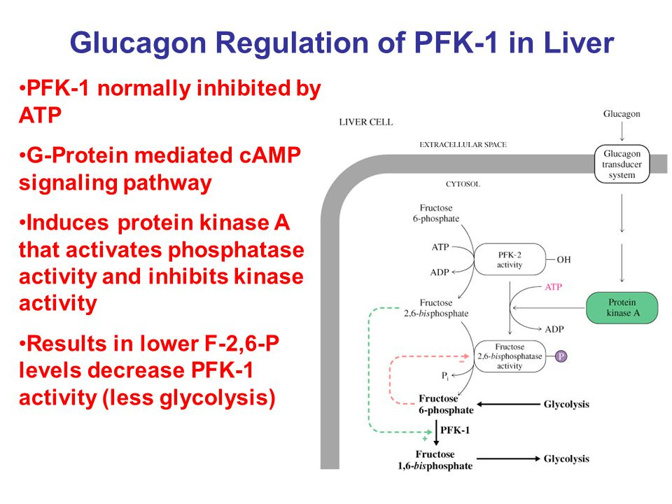 Glucagon Regulation of PFK-1 in Liver