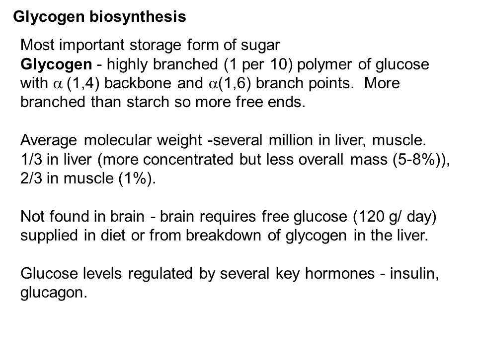 Glycogen biosynthesis