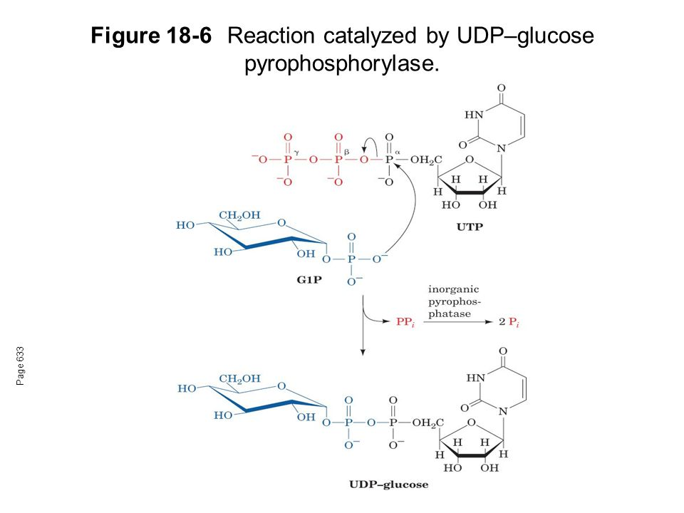 Figure 18-6 Reaction catalyzed by UDP–glucose pyrophosphorylase.