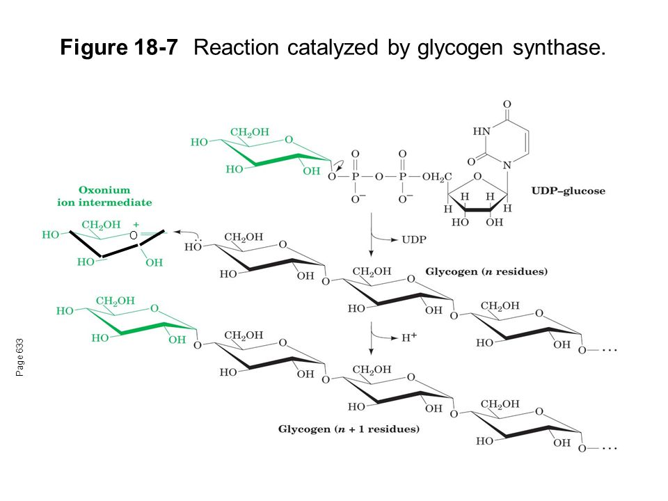 Figure 18-7 Reaction catalyzed by glycogen synthase.