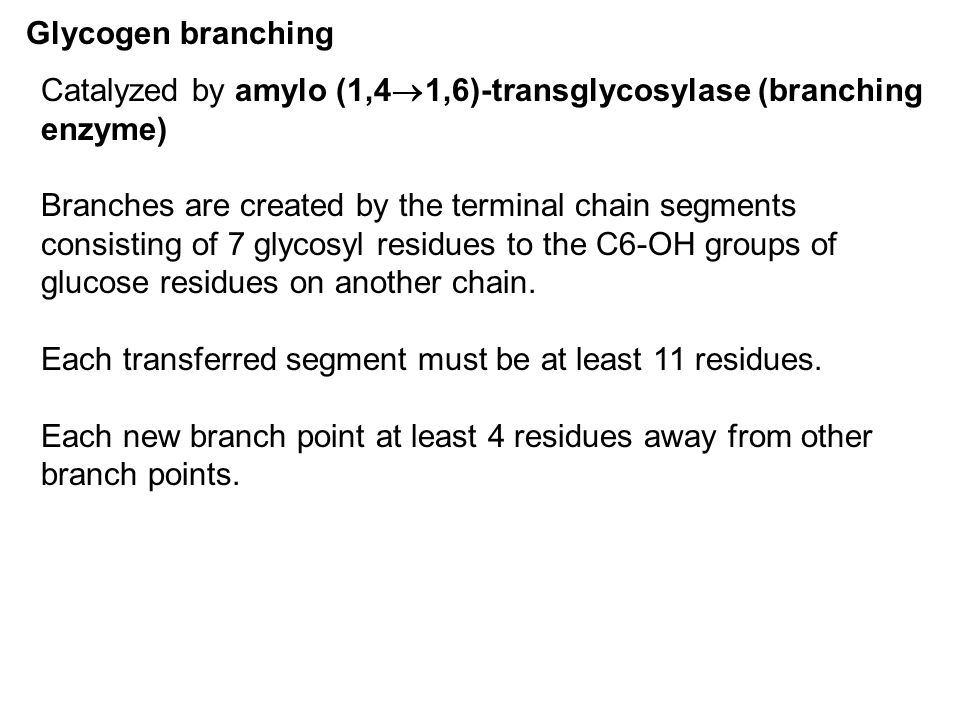 Glycogen branching Catalyzed by amylo (1,41,6)-transglycosylase (branching enzyme)