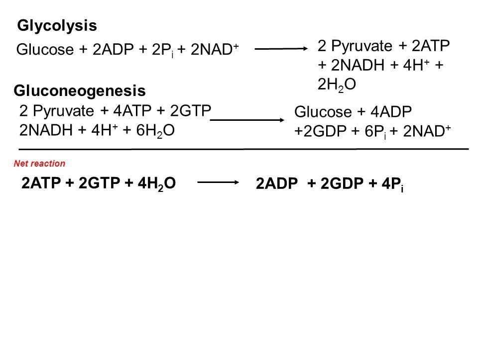 2 Pyruvate + 2ATP + 2NADH + 4H+ + 2H2O Glucose + 2ADP + 2Pi + 2NAD+