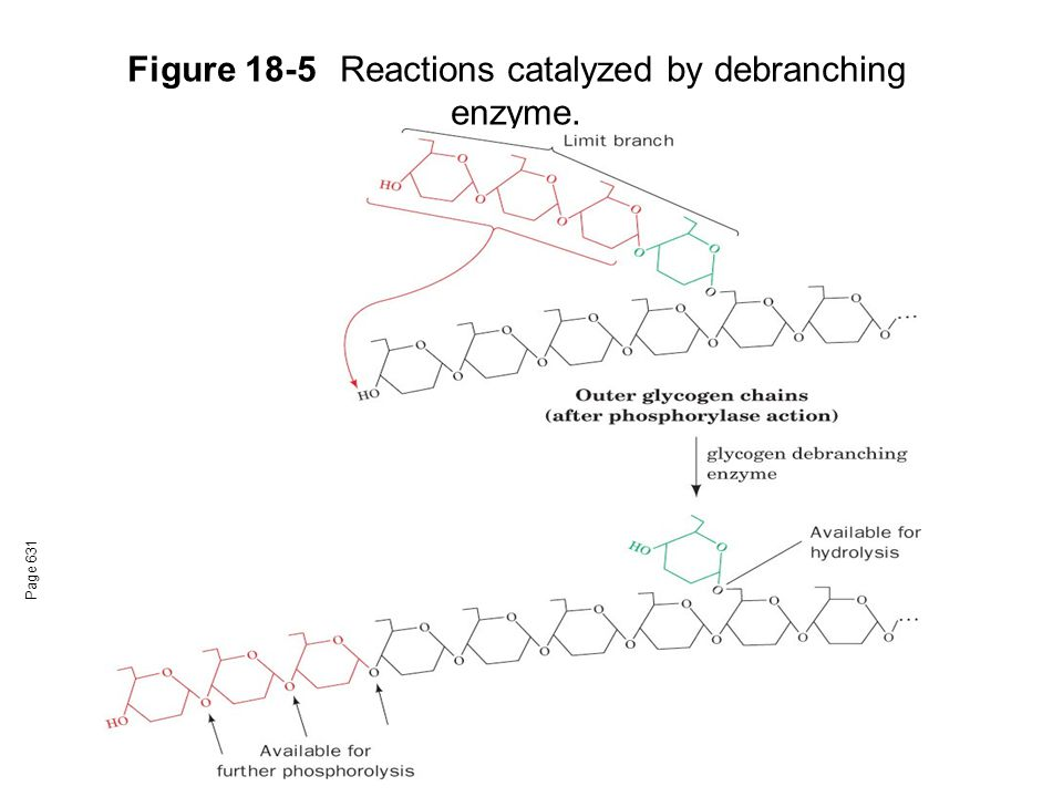 Figure 18-5 Reactions catalyzed by debranching enzyme.