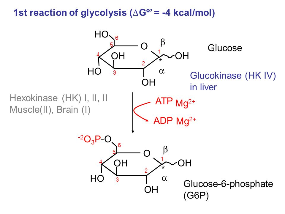 1st reaction of glycolysis (Gº' = -4 kcal/mol)