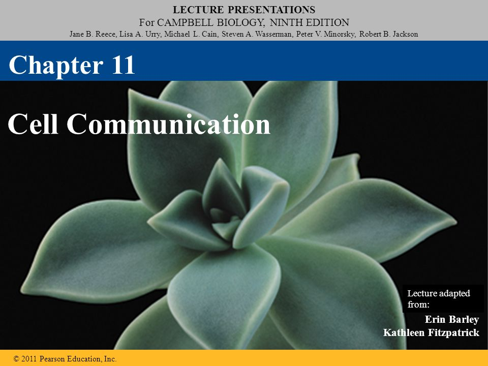 Chapter 11 Cell Communication Lecture adapted from: