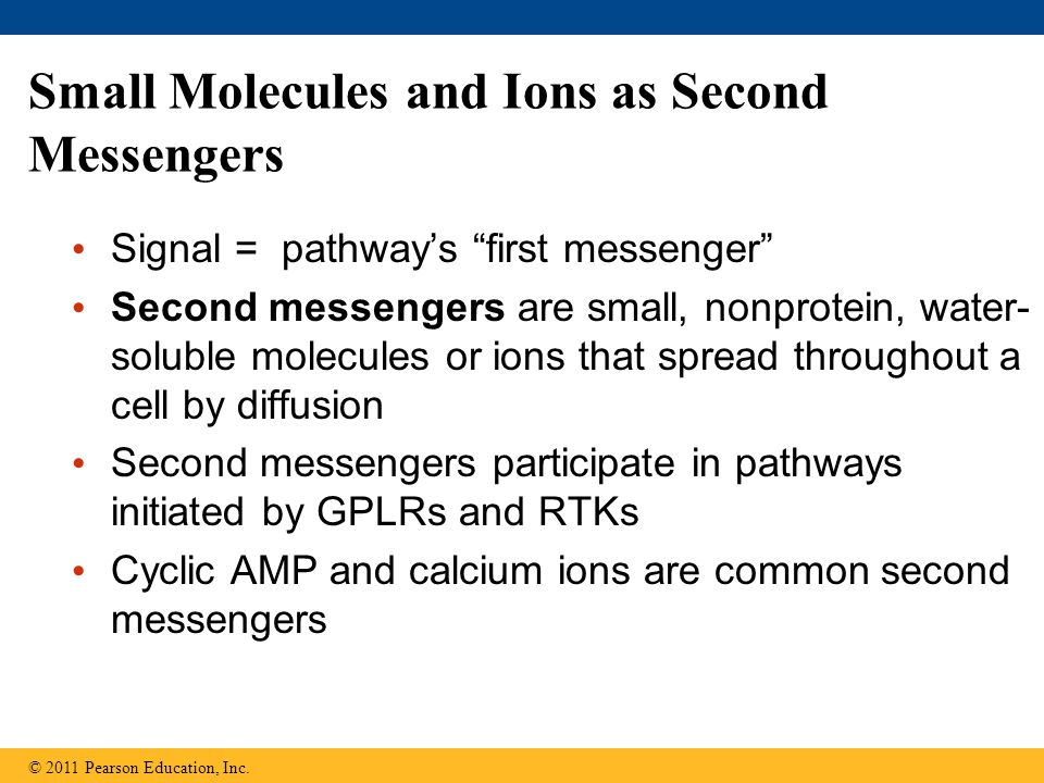 Small Molecules and Ions as Second Messengers