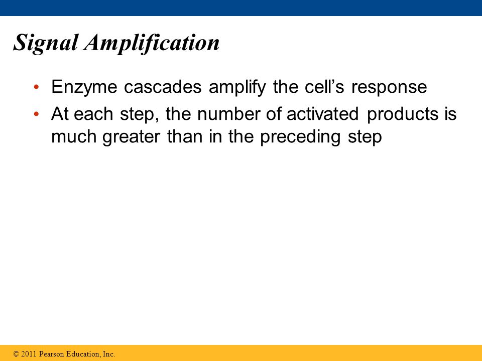 Signal Amplification Enzyme cascades amplify the cell's response
