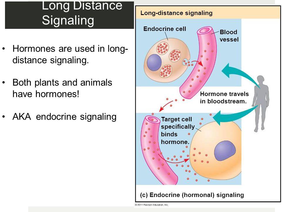 Long Distance Signaling
