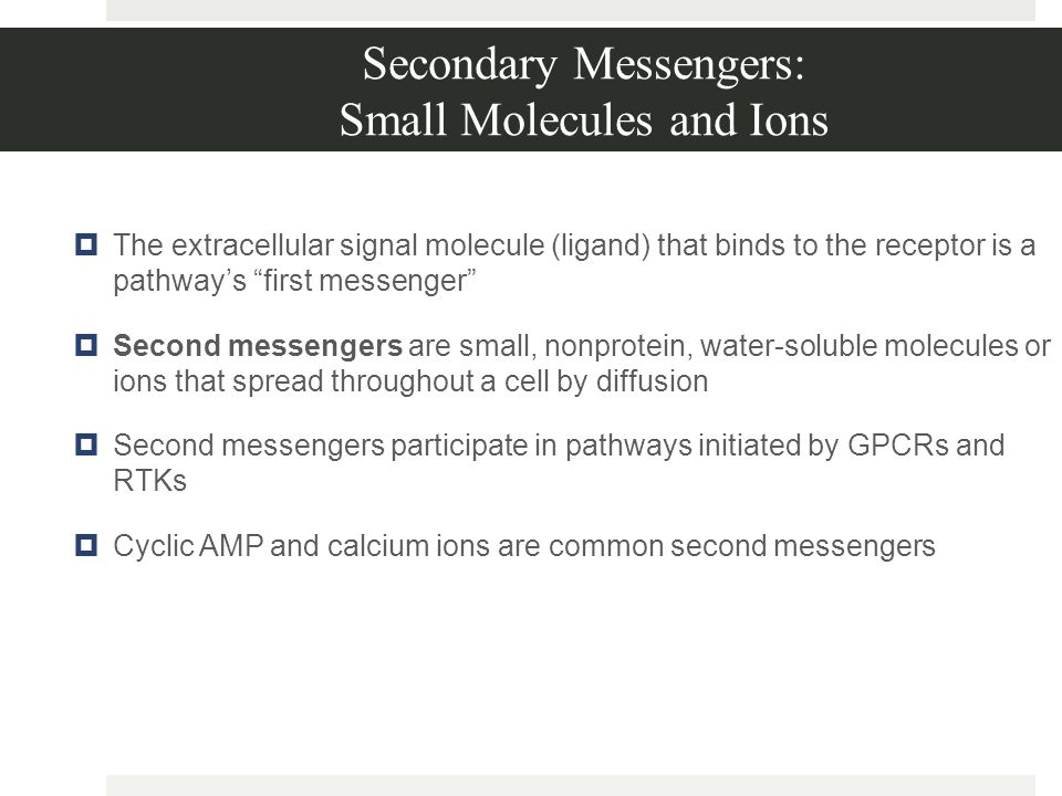 Secondary Messengers: Small Molecules and Ions