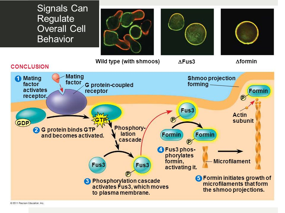 Signals Can Regulate Overall Cell Behavior