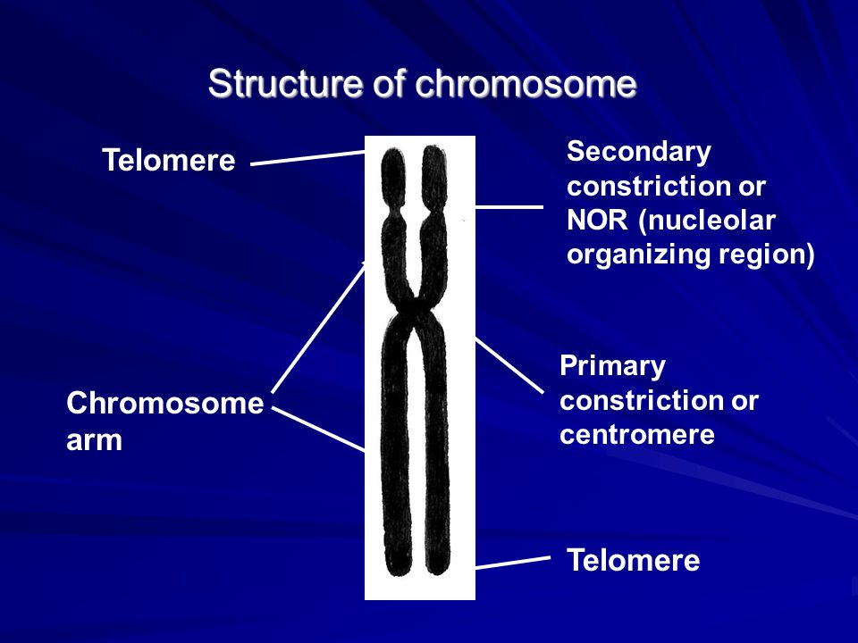 Structure of chromosome