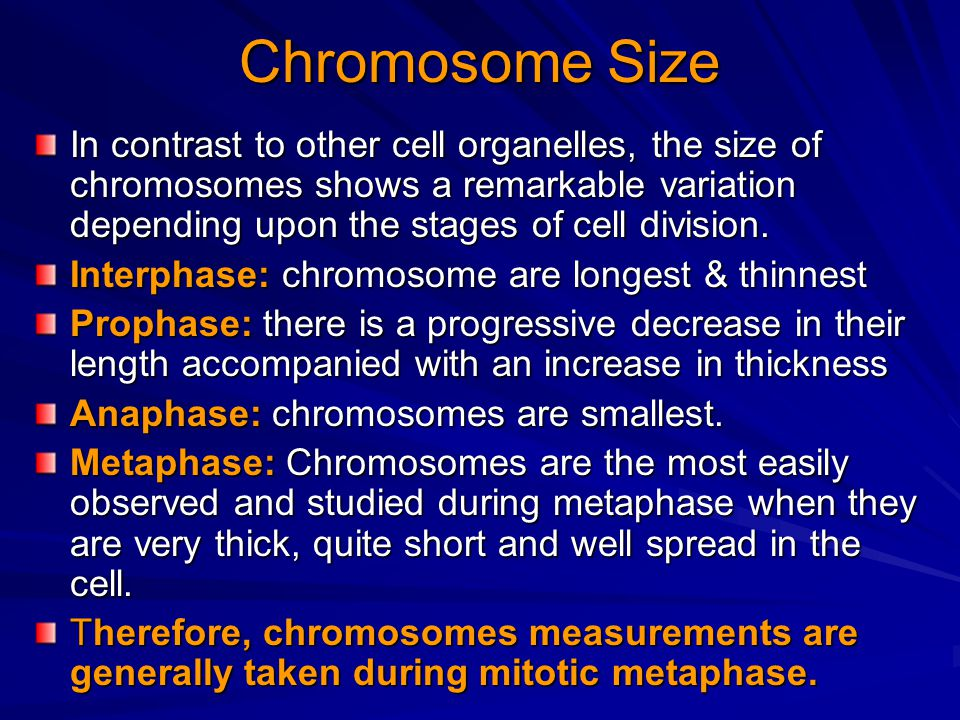 Chromosome Size