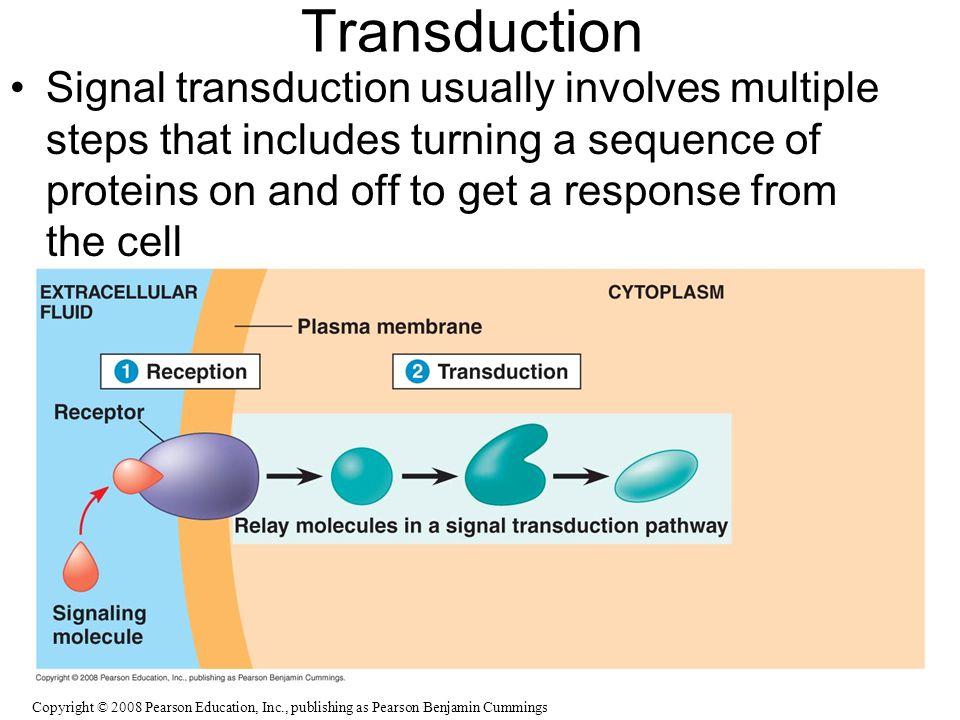 Transduction