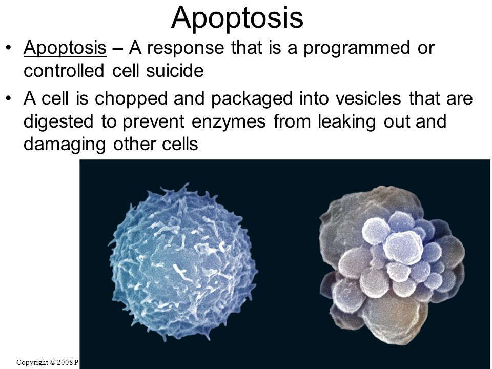 Apoptosis Apoptosis – A response that is a programmed or controlled cell suicide.