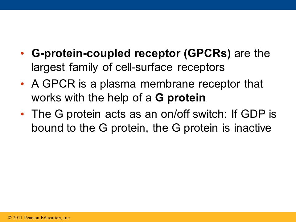 G-protein-coupled receptor (GPCRs) are the largest family of cell-surface receptors