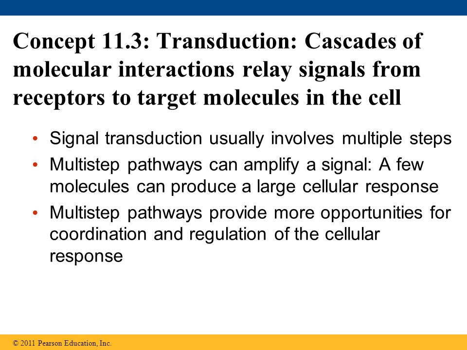 Concept 11.3: Transduction: Cascades of molecular interactions relay signals from receptors to target molecules in the cell
